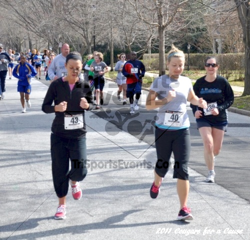 Cougars for a Cause: MJ3's 5K Run/Walk<br><br><br><br><a href='http://www.trisportsevents.com/pics/11_Cougars_for_a_Cause_057.JPG' download='11_Cougars_for_a_Cause_057.JPG'>Click here to download.</a><Br><a href='http://www.facebook.com/sharer.php?u=http:%2F%2Fwww.trisportsevents.com%2Fpics%2F11_Cougars_for_a_Cause_057.JPG&t=Cougars for a Cause: MJ3's 5K Run/Walk' target='_blank'><img src='images/fb_share.png' width='100'></a>