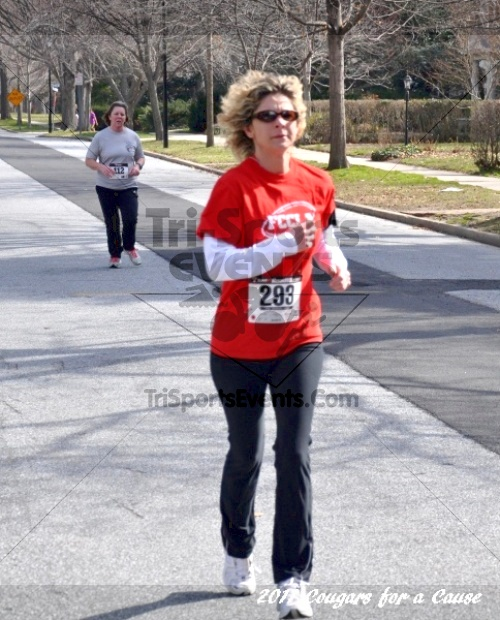 Cougars for a Cause: MJ3's 5K Run/Walk<br><br><br><br><a href='https://www.trisportsevents.com/pics/11_Cougars_for_a_Cause_067.JPG' download='11_Cougars_for_a_Cause_067.JPG'>Click here to download.</a><Br><a href='http://www.facebook.com/sharer.php?u=http:%2F%2Fwww.trisportsevents.com%2Fpics%2F11_Cougars_for_a_Cause_067.JPG&t=Cougars for a Cause: MJ3's 5K Run/Walk' target='_blank'><img src='images/fb_share.png' width='100'></a>