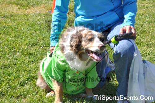 Kent County SPCA Scamper for Paws & Claws - In Memory of Peder Hansen<br><br><br><br><a href='https://www.trisportsevents.com/pics/pic098.JPG' download='pic098.JPG'>Click here to download.</a><Br><a href='http://www.facebook.com/sharer.php?u=http:%2F%2Fwww.trisportsevents.com%2Fpics%2Fpic098.JPG&t=Kent County SPCA Scamper for Paws & Claws - In Memory of Peder Hansen' target='_blank'><img src='images/fb_share.png' width='100'></a>